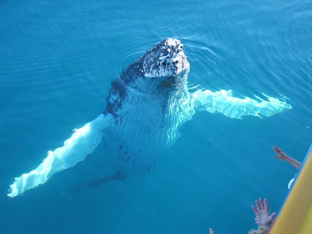 Hervey  Bay Whale Encounter Package